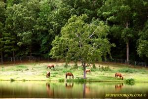 Horse Farm and Lake Near Hot Springs