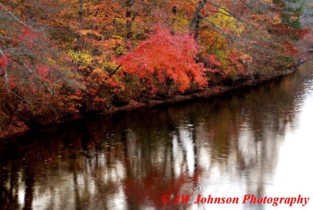 Fouche River Near Waldron Nov 2010