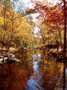 Gulpha Gorge Creek 2