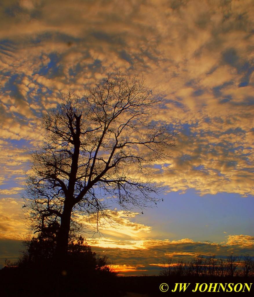 81 Sunday Tree Sunset