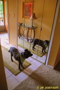 24 Missy Reflection in Foyer