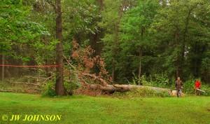 Big Tree On The Ground