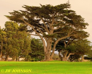 Pacific Grove Golf Course 6