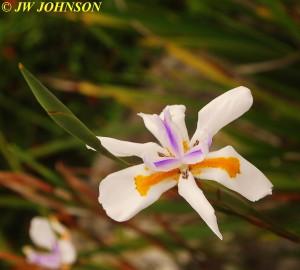 Sea Breeze Inn Flowers 9