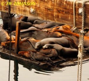 Seals A Sleepin 0920 Fishermans Wharf 4