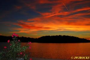 118 Sunset Sunday Night Rosebush