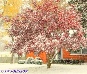 Figone Residence Tree on Elmont Rd 2