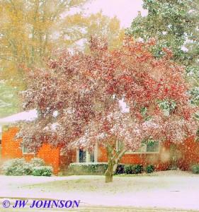 Figone Residence Tree on Elmont Rd