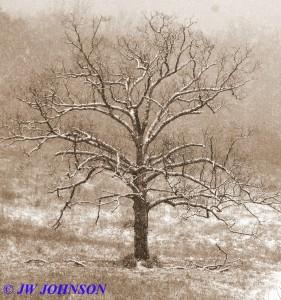 Lone Tree Hughes Ford Rd Horse Farm 2