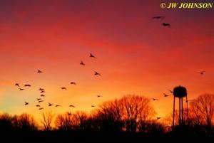 24 Geese Landing City Lake