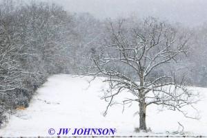 Lone Oak Tree on Hughes Fd Rd 3