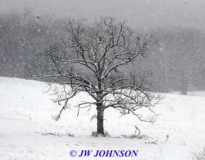 Lone Oak Tree on Hughes Fd Rd