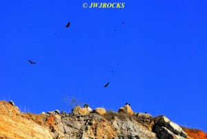 120 Vultures Flying Overhead