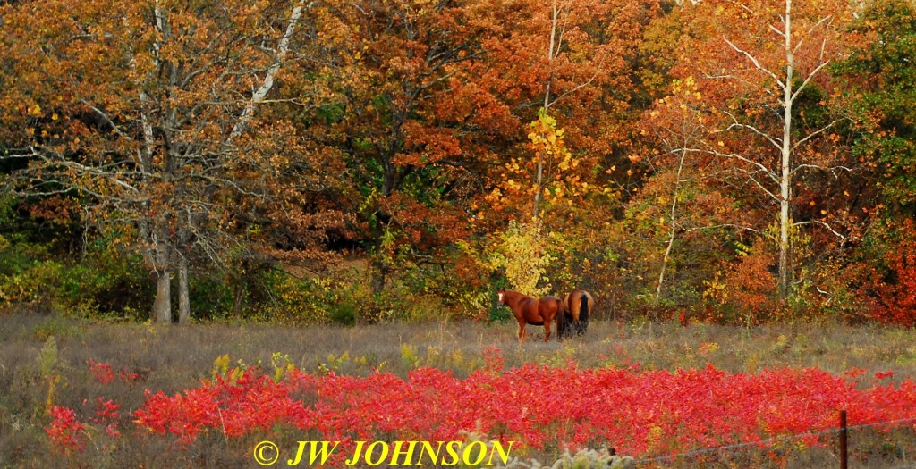 Horses in Sumac Field Hwy WW 2