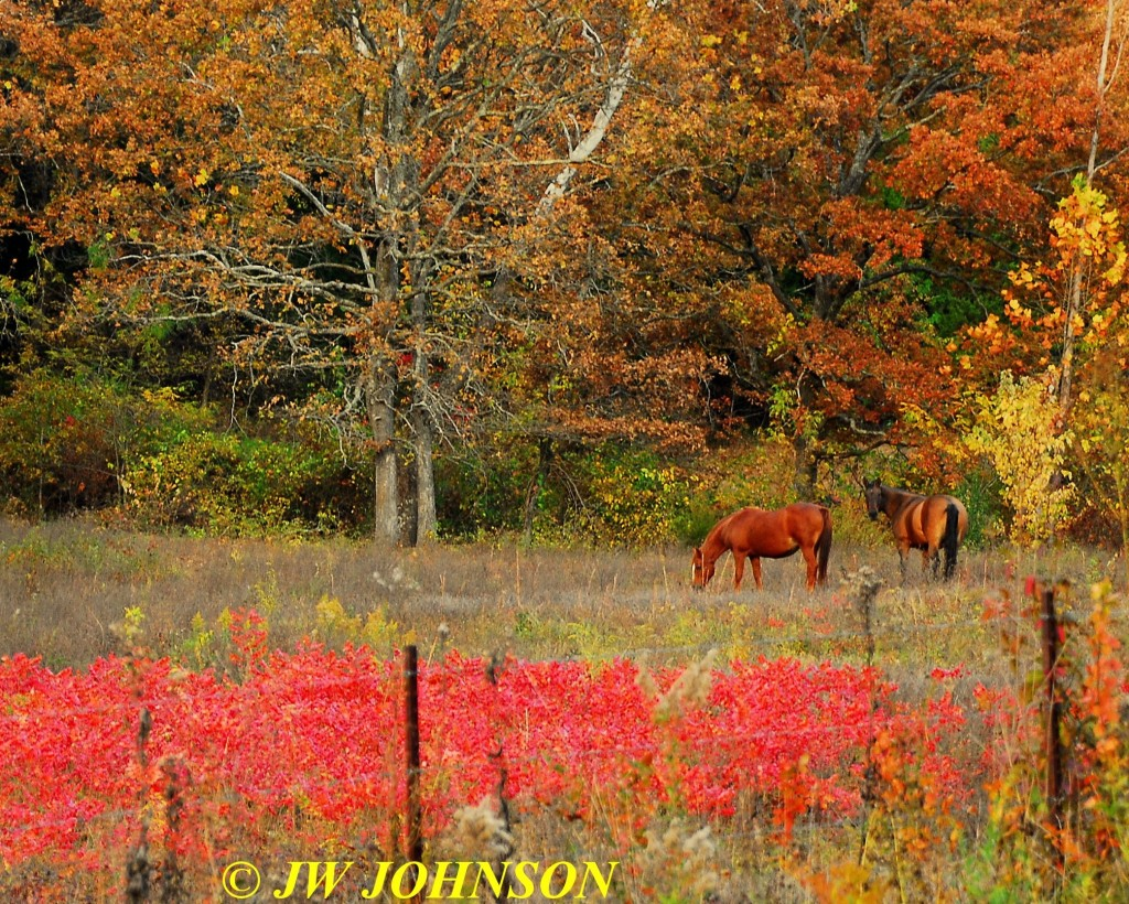 Horses in Sumac Field Hwy WW 3
